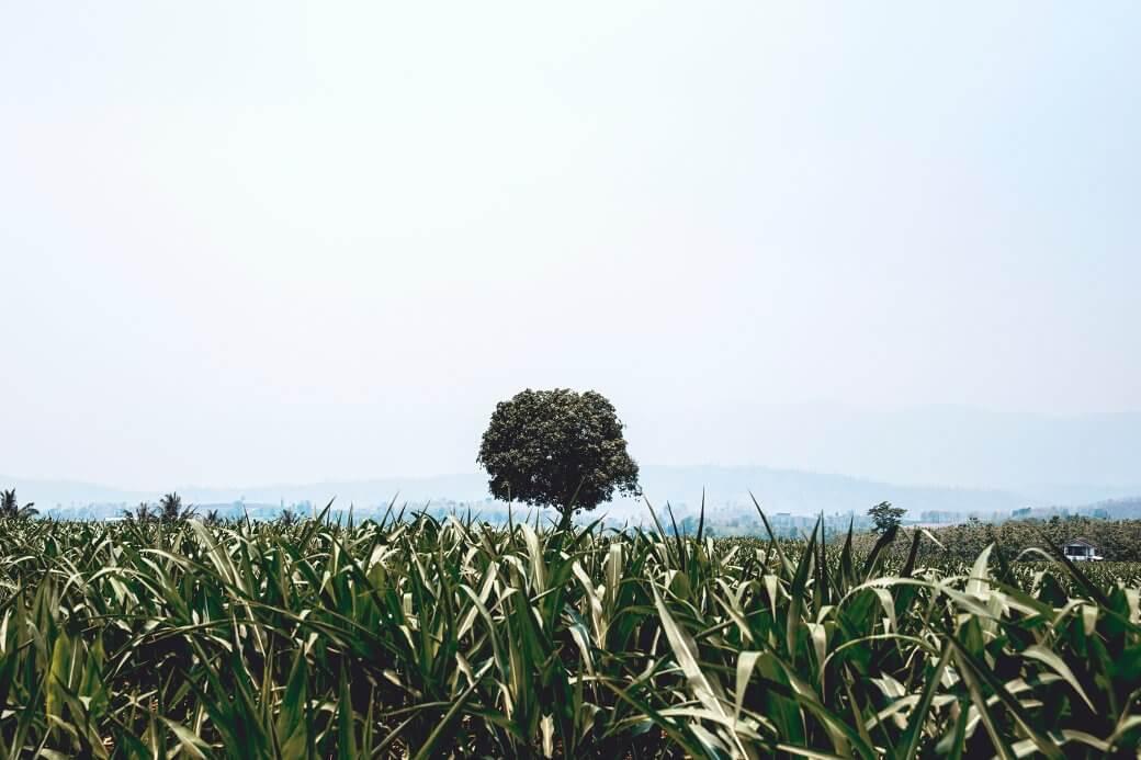 Brauner Naturzucker online kaufen